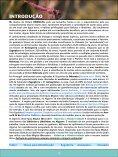 Odonatas no Algarve - iDescobrir - Avançada - Turismo do Algarve - Page 4