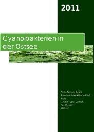 Cyanobakterien in der Ostsee - Hamburger Bildungsserver