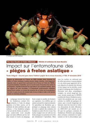 Frelon Asiatique  Chambre DAgriculture De La Dordogne