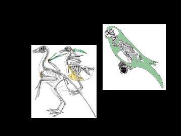 Skeleton pdf