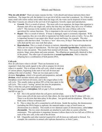 Meiosis WebQuest