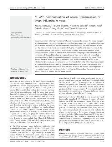 In vitro demonstration of neural transmission of avian ... - Bird Flu