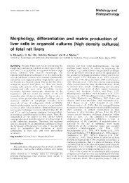 of fetal rat liver - Digitum