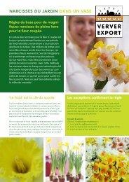Narcisses du jardiN daNs uN vase - Ververexport.nl