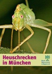 Heuschrecken in München - Bund Naturschutz