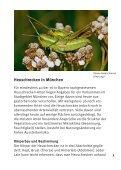 Heuschrecken in München - Bund Naturschutz - Seite 3