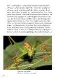 Heuschrecken in München - Bund Naturschutz - Seite 4