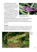 Heuschrecken in München - Bund Naturschutz - Seite 5