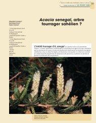 Acacia senegal, arbre fourrager sahélien ? - Bois et forêts des ...