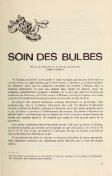 Soin des bulbes - Page 3