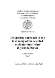 Polyphasic approach to the taxonomy of the selected oscillatorian ...