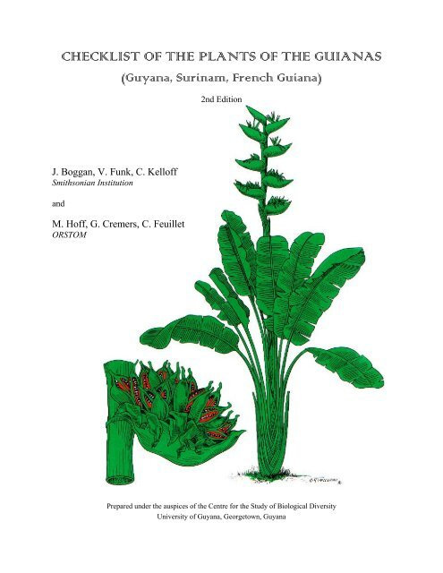 10 seed Protium serratum Eng BURSERACEAE Ancient herb fruit more than 50 Wall.