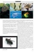 Der der Schöpfung - Werner Gitt - Seite 7