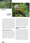 Article original - Waldwissen.net - Page 3