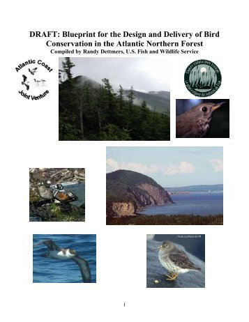 A Blueprint for Bird Conservation in the Atlantic Northern Forest