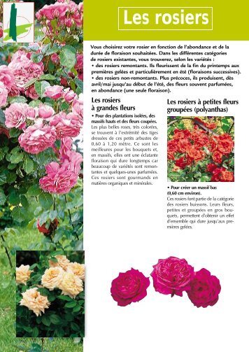 Les rosiers - frederic LABRADOR - jardinier paysagiste