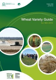 Wheat Variety Guide