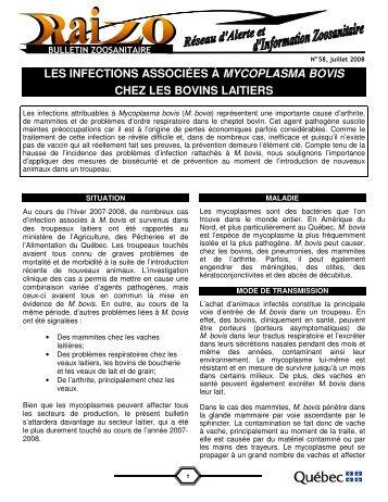 LES INFECTIONS ASSOCIÉES À MYCOPLASMA BOVIS ... - MAPAQ
