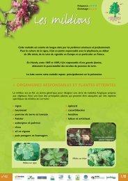 1. ORGANISMES RESPONSABLES ET PLANTES ATTEINTES