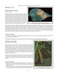 Maladies et insectes déprédateurs des arbres en Ontario