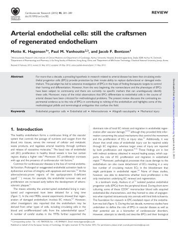 Arterial endothelial cells - Cardiovascular Research