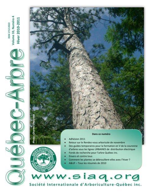 Marais-Chêne Quercus palustris 8 Graines quantités remise!!!