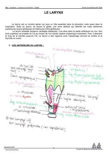 le larynx - Faculté de médecine de Montpellier
