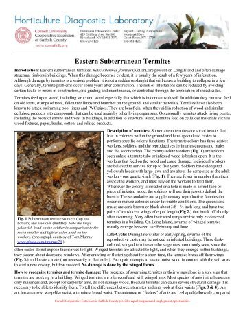 Eastern Subterranean Termites - Cornell Cooperative Extension of ...