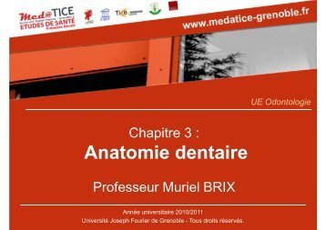Anatomie dentaire - Université Virtuelle Paris 5
