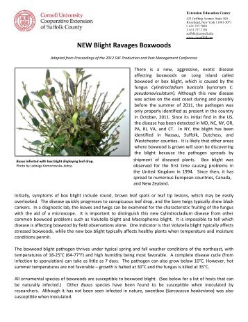 NEW Blight Ravages Boxwoods - Cornell Cooperative Extension of ...