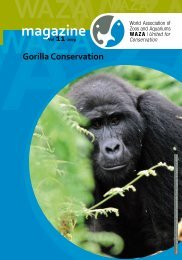 Gorilla Conservation - Year of the Gorilla 2009