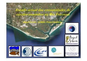 Estado actual das comunidades de cavalos-marinhos na ... - CCMAR