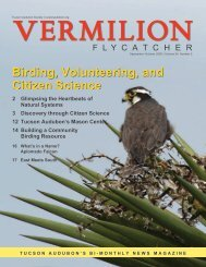 birding, Volunteering, and citizen science - Tucson Audubon Society
