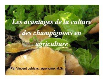 Les avantages de la culture des champignons en agriculture Les ...