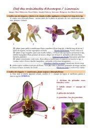 Clef des orchidacées d'Auvergne / Limousin - Faune Flore du Massif ...