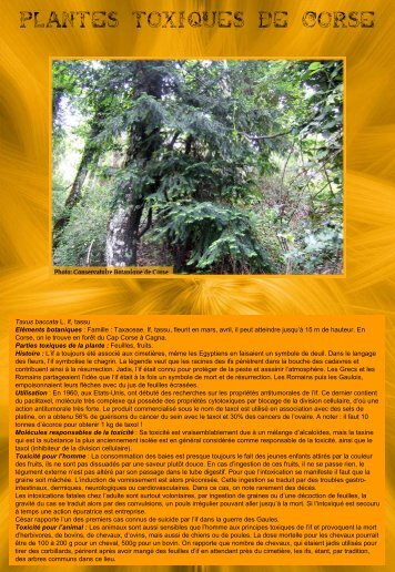 plantes toxiques de corse - Casavecchia