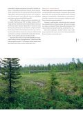 Metsä-Lapin - forestinfo.fi - Page 7