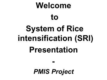 Download presentation - The System of Rice Intensification