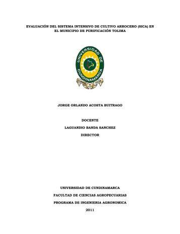 evaluación del sistema intensivo de cultivo arrocero (sica)