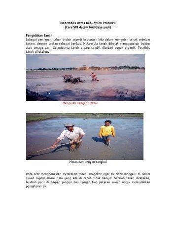 Cara SRI dalam budidaya padi - The System of Rice Intensification