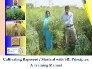 Cultivating Rapeseed/Mustard with SRI Principles - The System of ...