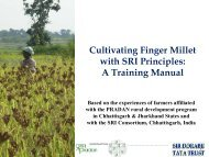 Cultivating Finger millet with SRI Principles: A Training Manual