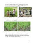 Rice production in the Family Food Production project - Page 3