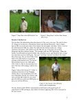 Rice production in the Family Food Production project - Page 4