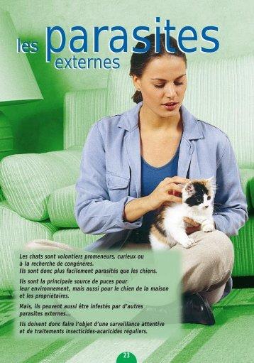 Les parasites externes du chaton - le Norvegien - le chat Norvegien