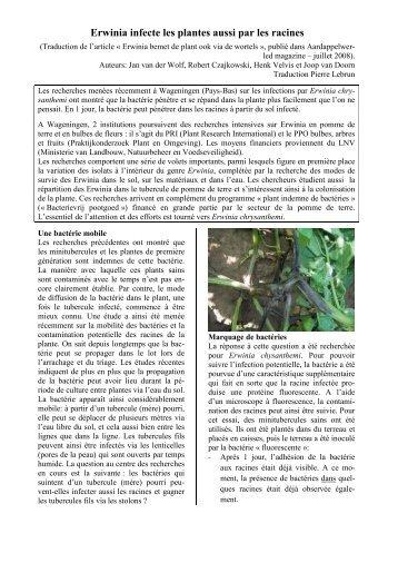Erwinia infecte les plantes aussi par les racines - OVH.net