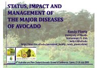 status, impact and management of the major diseases of avocado