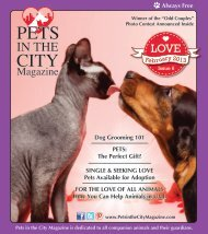 Always Free February 2013 - Pets in the City Magazine