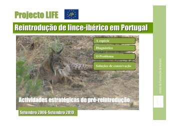 Projecto lince
