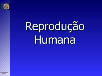 Morfofisiologia masculina
